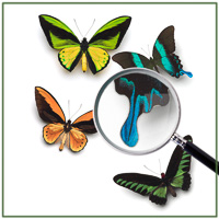 DJW_02013713_Butterflies.jpg